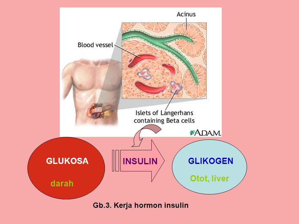 GLUKOSAGLIKOGEN darah Otot, liver INSULIN Gb.3. Kerja hormon insulin