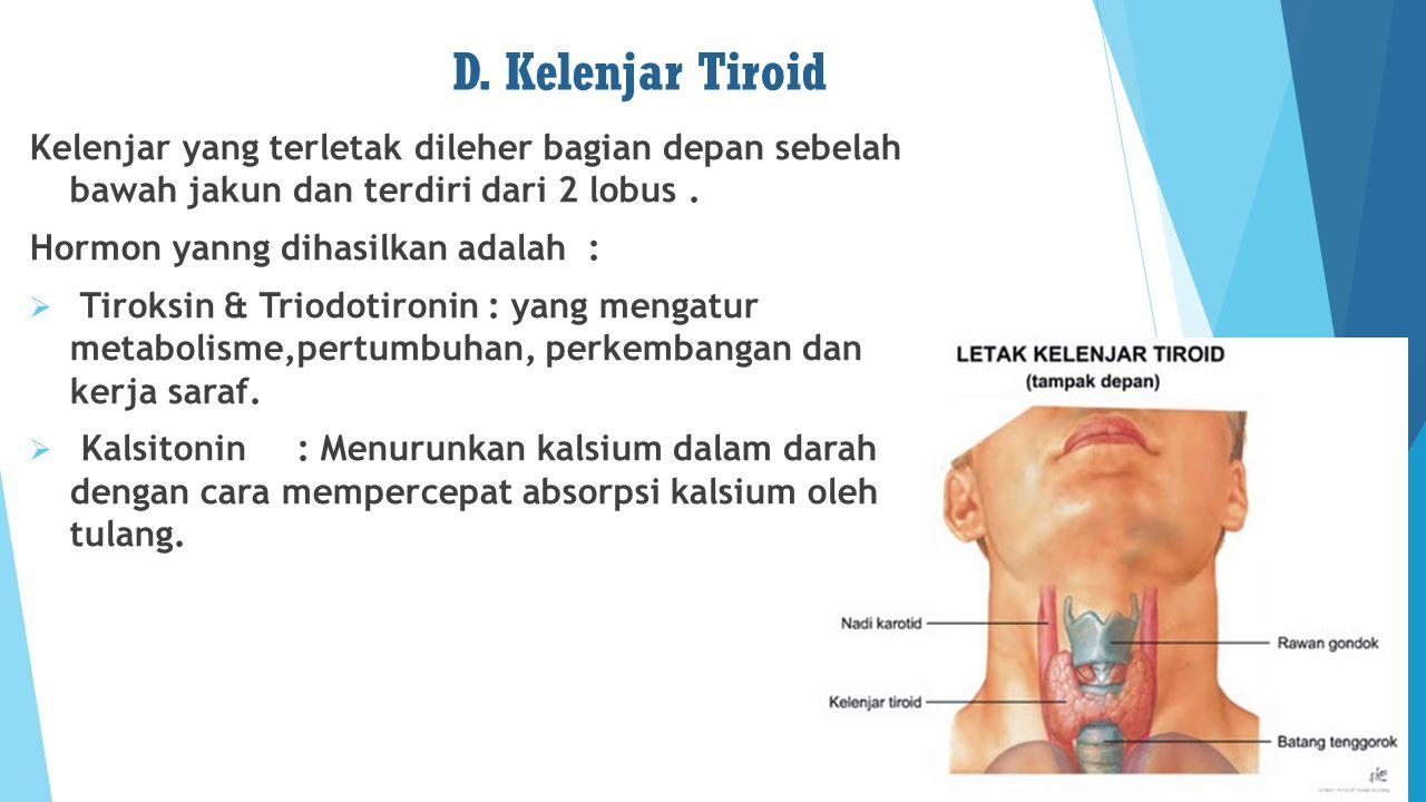 D. Kelenjar Tiroid Kelenjar yang terletak dileher bagian depan sebelah bawah jakun dan terdiri dari 2 lobus. Hormon yanng dihasilkan adalah :  Tiroks