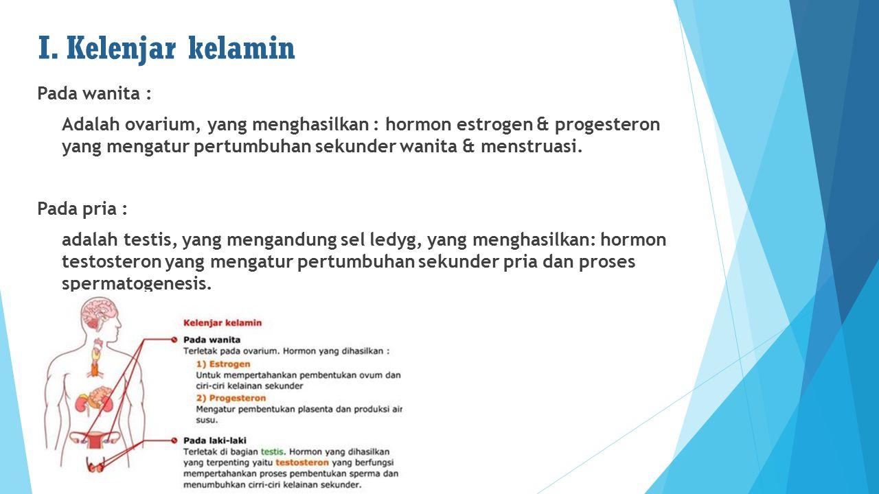 I. Kelenjar kelamin Pada wanita : Adalah ovarium, yang menghasilkan : hormon estrogen & progesteron yang mengatur pertumbuhan sekunder wanita & menstr