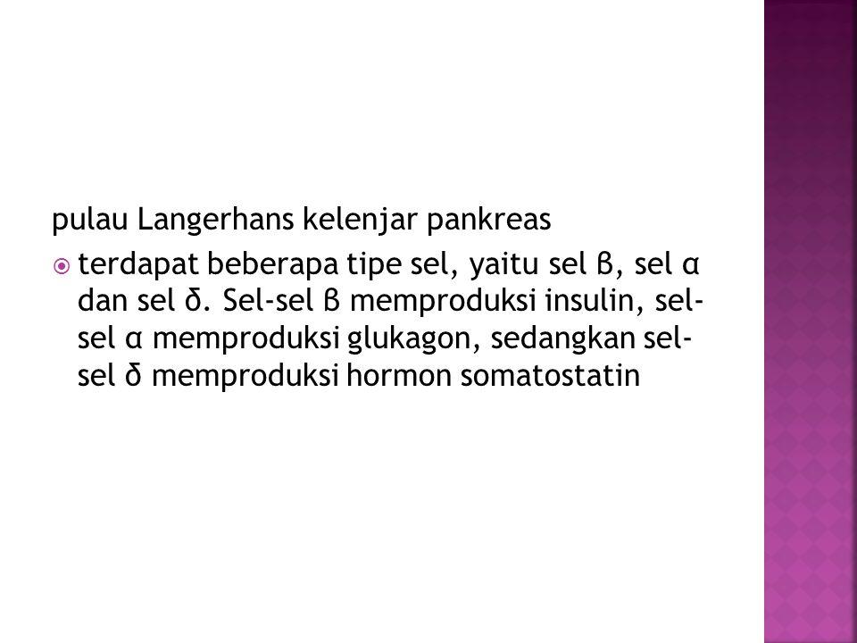pulau Langerhans kelenjar pankreas  terdapat beberapa tipe sel, yaitu sel β, sel α dan sel δ. Sel-sel β memproduksi insulin, sel- sel α memproduksi g