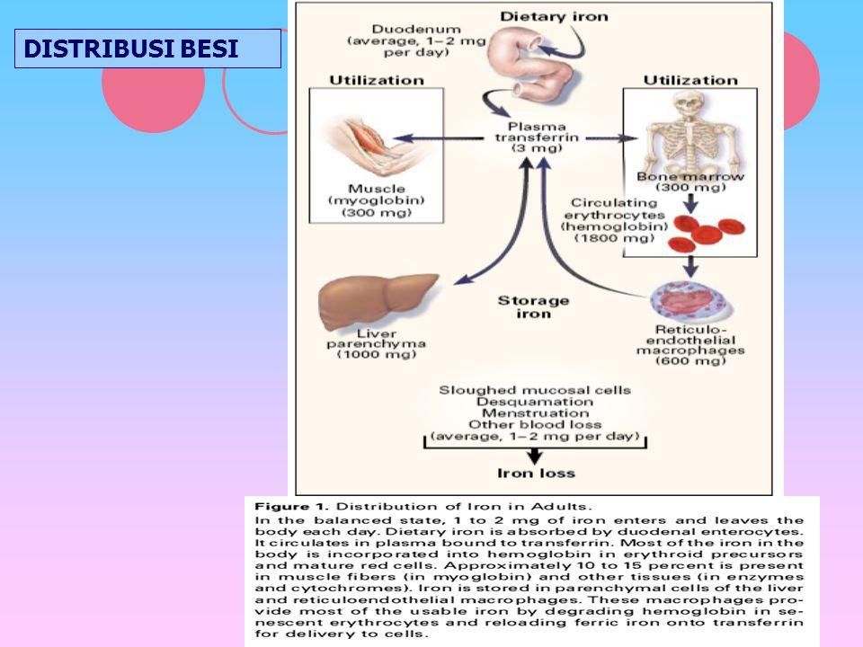ANEMIA DEFISIENSI(3 ) Serum feritin: substansi yg terdiri atas besi yg diikat oleh protein yg disebut apoferitin.