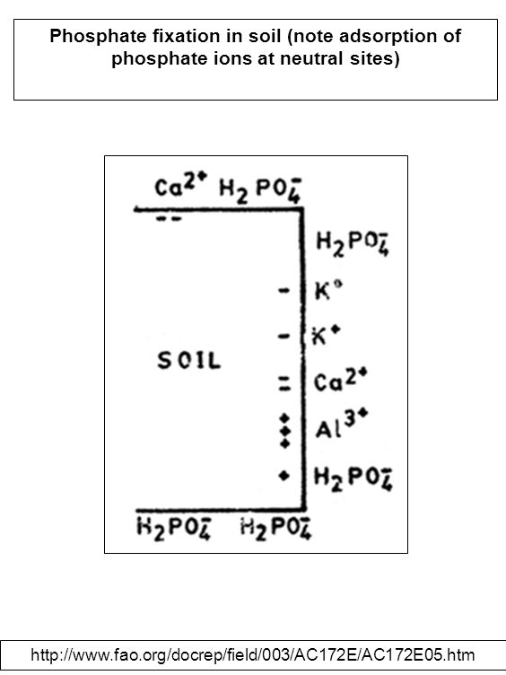 Phosphate fixation in soil (note adsorption of phosphate ions at neutral sites) http://www.fao.org/docrep/field/003/AC172E/AC172E05.htm