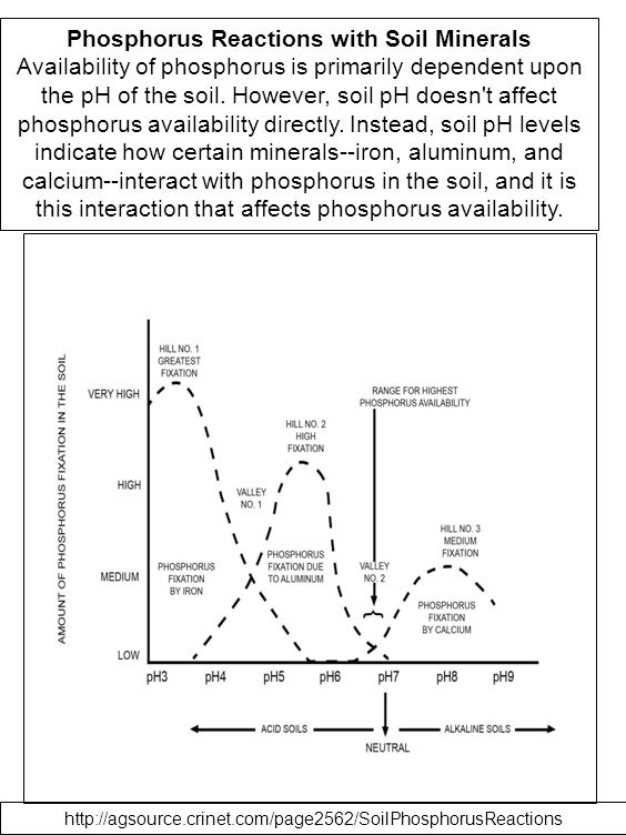 Phosphorus Reactions with Soil Minerals Availability of phosphorus is primarily dependent upon the pH of the soil. However, soil pH doesn't affect pho