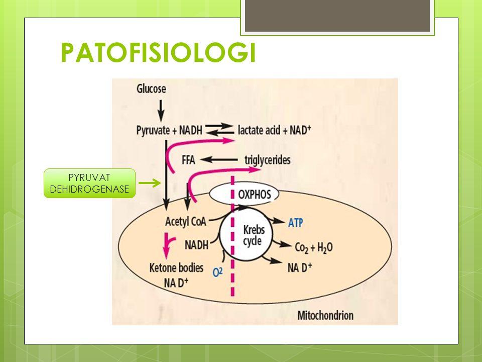 PATOFISIOLOGI PYRUVAT DEHIDROGENASE