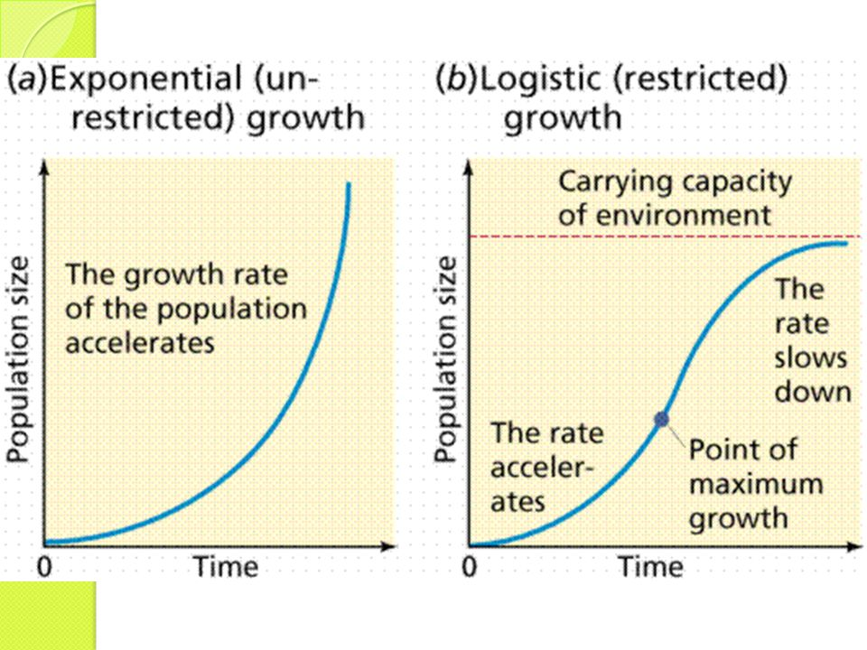 A : Kurva potensi biotis = kurva eksponensial (keadaan serba ideal).