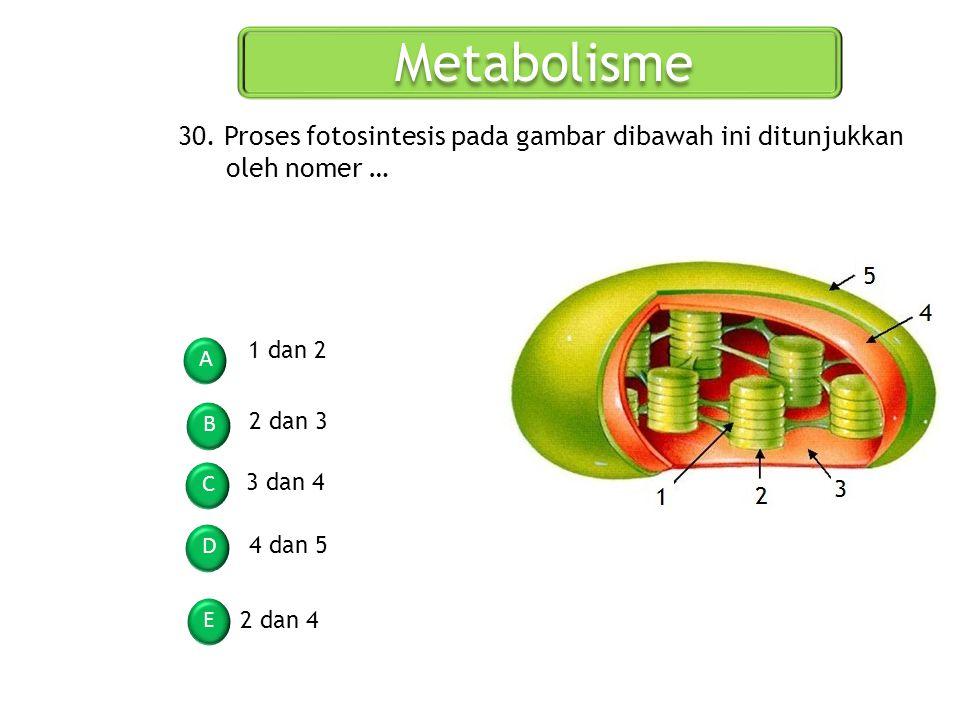 Metabolisme A B C D E 30. Proses fotosintesis pada gambar dibawah ini ditunjukkan oleh nomer … 1 dan 2 2 dan 3 3 dan 4 4 dan 5 2 dan 4