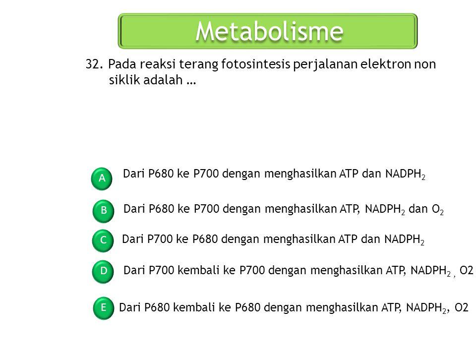 Metabolisme A B C D E 32. Pada reaksi terang fotosintesis perjalanan elektron non siklik adalah … Dari P680 ke P700 dengan menghasilkan ATP dan NADPH