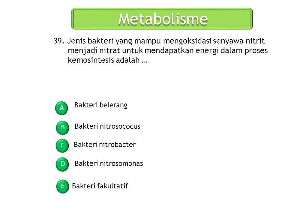 Metabolisme A B C D E 39. Jenis bakteri yang mampu mengoksidasi senyawa nitrit menjadi nitrat untuk mendapatkan energi dalam proses kemosintesis adala