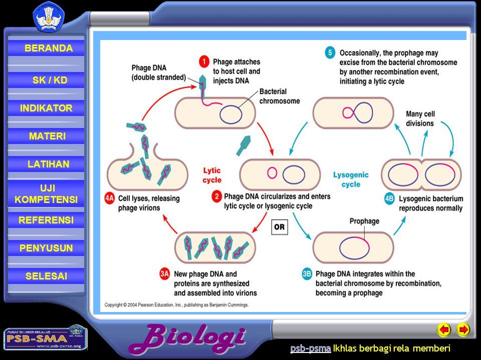 REFERENSI LATIHAN MATERI PENYUSUN INDIKATOR SK / KD UJI KOMPETENSI BERANDA SELESAI Pada siklus ini sel inangnya tidak hancur tetapi disisipi oleh asam