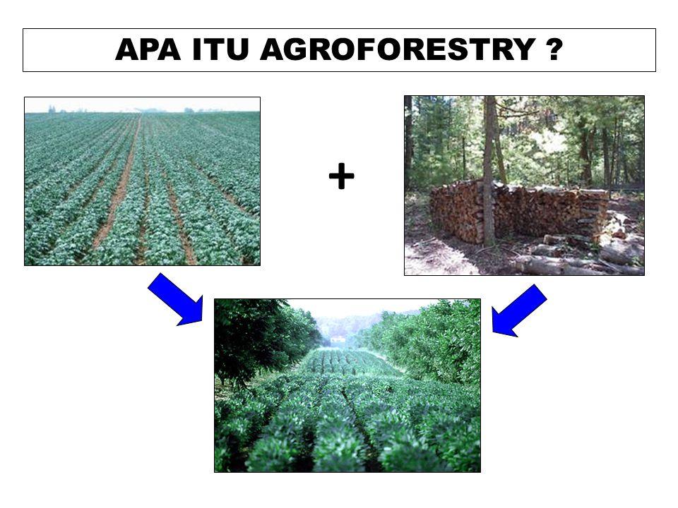 APA ITU AGROFORESTRY ? +