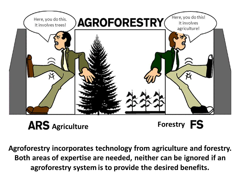 Agroforestry incorporates technology from agriculture and forestry. Both areas of expertise are needed, neither can be ignored if an agroforestry syst
