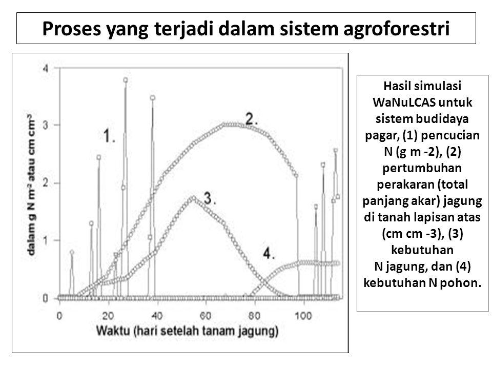 Proses yang terjadi dalam sistem agroforestri Hasil simulasi WaNuLCAS untuk sistem budidaya pagar, (1) pencucian N (g m -2), (2) pertumbuhan perakaran (total panjang akar) jagung di tanah lapisan atas (cm cm -3), (3) kebutuhan N jagung, dan (4) kebutuhan N pohon.