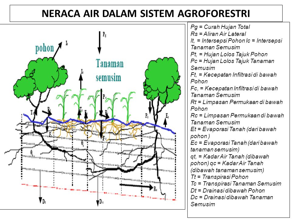 NERACA AIR DALAM SISTEM AGROFORESTRI Pg = Curah Hujan Total Rs = Aliran Air Lateral It, = Intersepsi Pohon Ic = Intersepsi Tanaman Semusim Pt, = Hujan