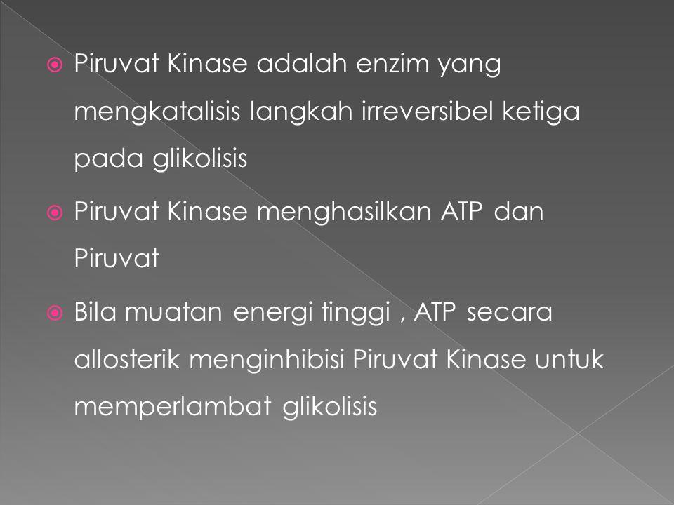  Piruvat Kinase adalah enzim yang mengkatalisis langkah irreversibel ketiga pada glikolisis  Piruvat Kinase menghasilkan ATP dan Piruvat  Bila muatan energi tinggi, ATP secara allosterik menginhibisi Piruvat Kinase untuk memperlambat glikolisis