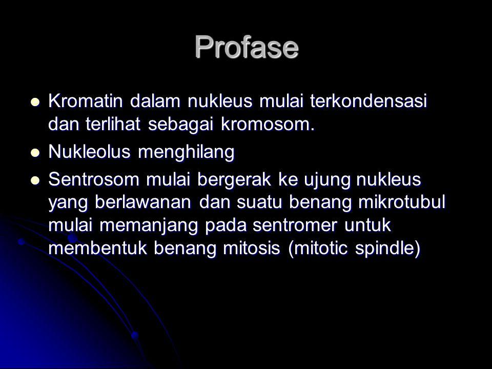 Profase Kromatin dalam nukleus mulai terkondensasi dan terlihat sebagai kromosom. Kromatin dalam nukleus mulai terkondensasi dan terlihat sebagai krom