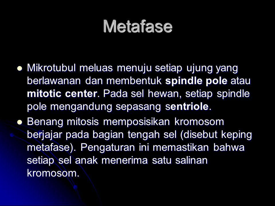 Metafase Mikrotubul meluas menuju setiap ujung yang berlawanan dan membentuk spindle pole atau mitotic center. Pada sel hewan, setiap spindle pole men