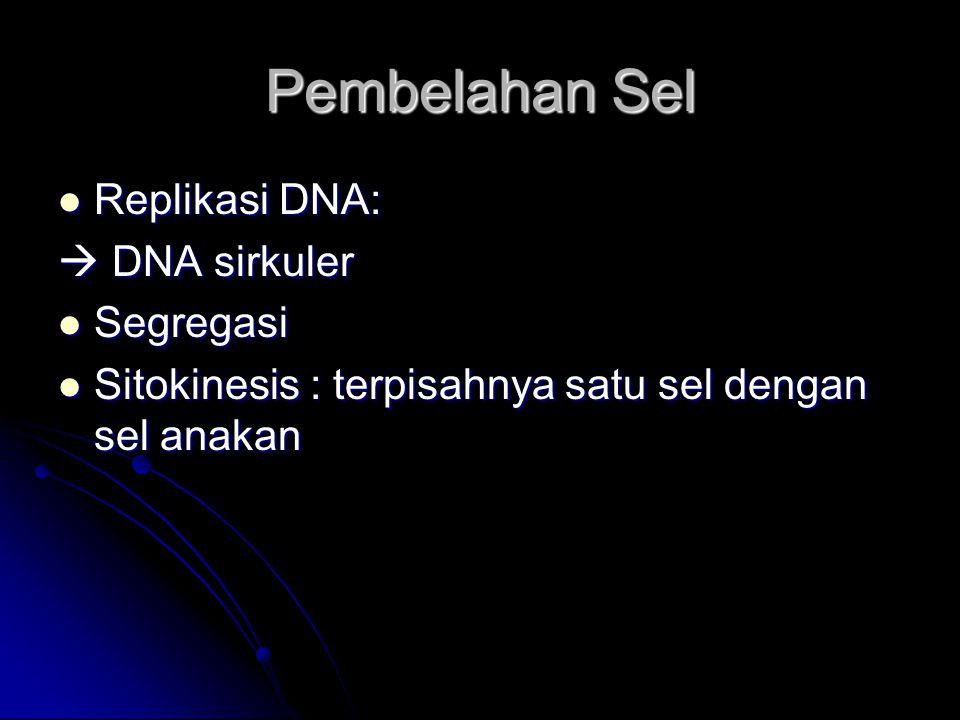 Pembelahan Sel Replikasi DNA: Replikasi DNA:  DNA sirkuler Segregasi Segregasi Sitokinesis : terpisahnya satu sel dengan sel anakan Sitokinesis : ter