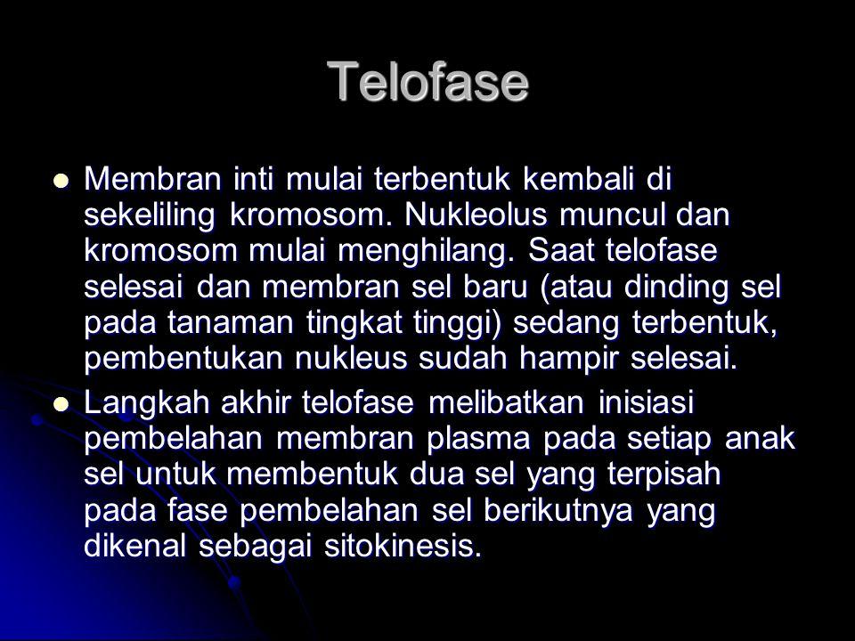 Telofase Membran inti mulai terbentuk kembali di sekeliling kromosom. Nukleolus muncul dan kromosom mulai menghilang. Saat telofase selesai dan membra