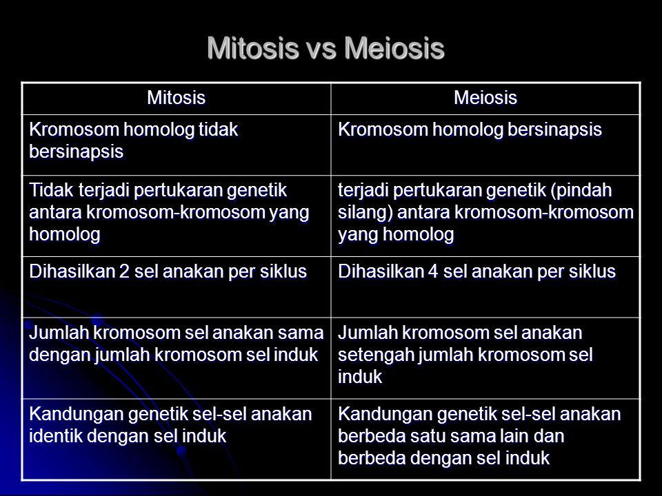 Mitosis vs Meiosis MitosisMeiosis Kromosom homolog tidak bersinapsis Kromosom homolog bersinapsis Tidak terjadi pertukaran genetik antara kromosom-kro