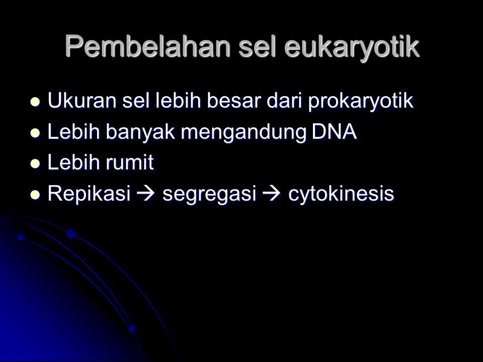 Pembelahan sel eukaryotik Ukuran sel lebih besar dari prokaryotik Ukuran sel lebih besar dari prokaryotik Lebih banyak mengandung DNA Lebih banyak men