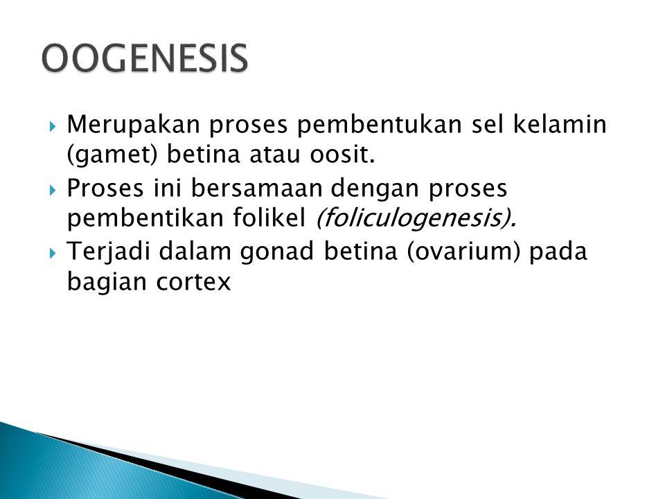  Merupakan proses pembentukan sel kelamin (gamet) betina atau oosit.  Proses ini bersamaan dengan proses pembentikan folikel (foliculogenesis).  Te
