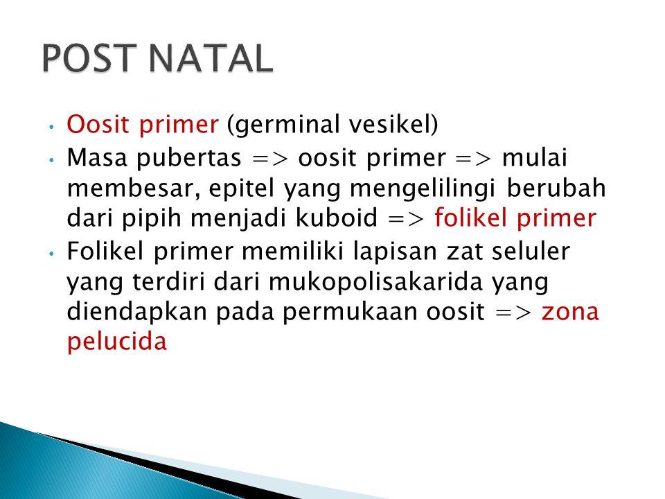 Oosit primer (germinal vesikel) Masa pubertas => oosit primer => mulai membesar, epitel yang mengelilingi berubah dari pipih menjadi kuboid => folikel