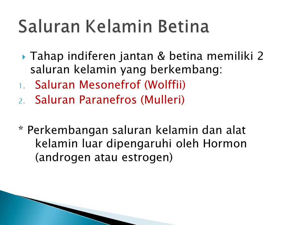  Tahap indiferen jantan & betina memiliki 2 saluran kelamin yang berkembang: 1. Saluran Mesonefrof (Wolffii) 2. Saluran Paranefros (Mulleri) * Perkem
