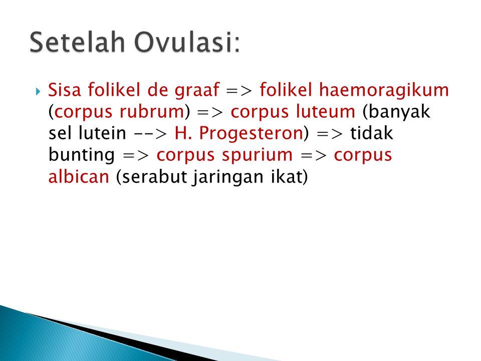  Sisa folikel de graaf => folikel haemoragikum (corpus rubrum) => corpus luteum (banyak sel lutein --> H. Progesteron) => tidak bunting => corpus spu