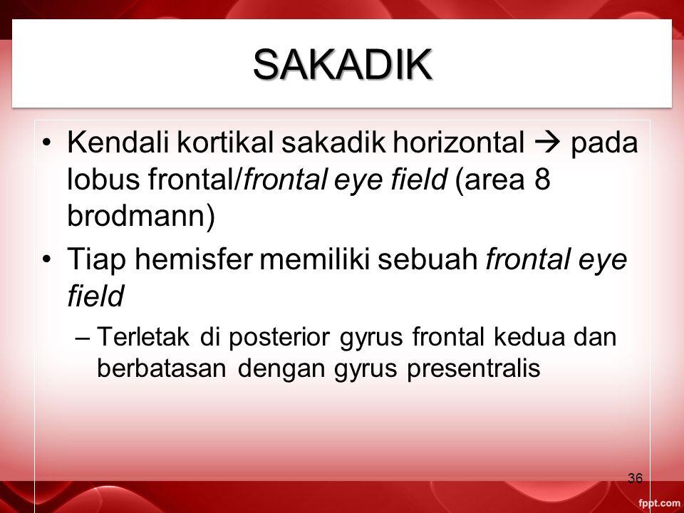 SAKADIKSAKADIK Kendali kortikal sakadik horizontal  pada lobus frontal/frontal eye field (area 8 brodmann) Tiap hemisfer memiliki sebuah frontal eye field –Terletak di posterior gyrus frontal kedua dan berbatasan dengan gyrus presentralis 36