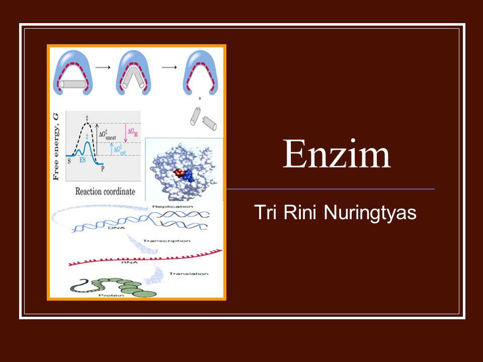 Cakupan: Definisi umum Bagian penting dari enzim Bagaimana enzim bekerja Hubungan enzim dng substrat Hubungan enzim dng inhibitor Faktor-faktor yang mempengaruhi kerja enzim Kinetika enzim