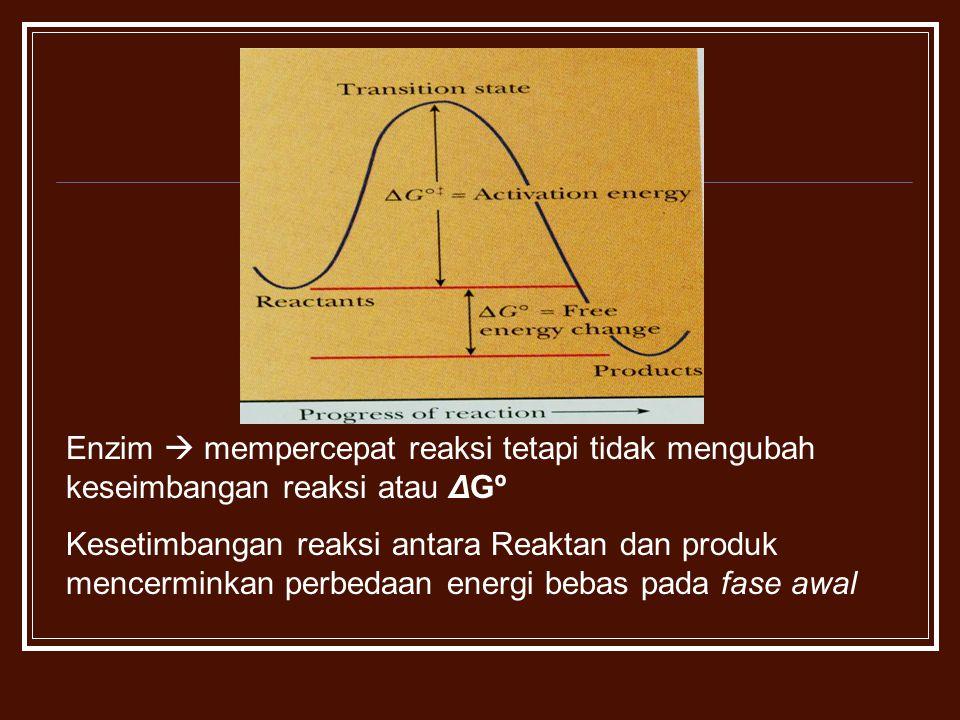 Enzim  mempercepat reaksi tetapi tidak mengubah keseimbangan reaksi atau ΔGº Kesetimbangan reaksi antara Reaktan dan produk mencerminkan perbedaan en