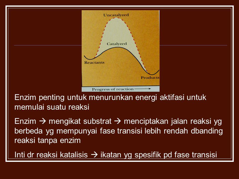 Enzim penting untuk menurunkan energi aktifasi untuk memulai suatu reaksi Enzim  mengikat substrat  menciptakan jalan reaksi yg berbeda yg mempunyai