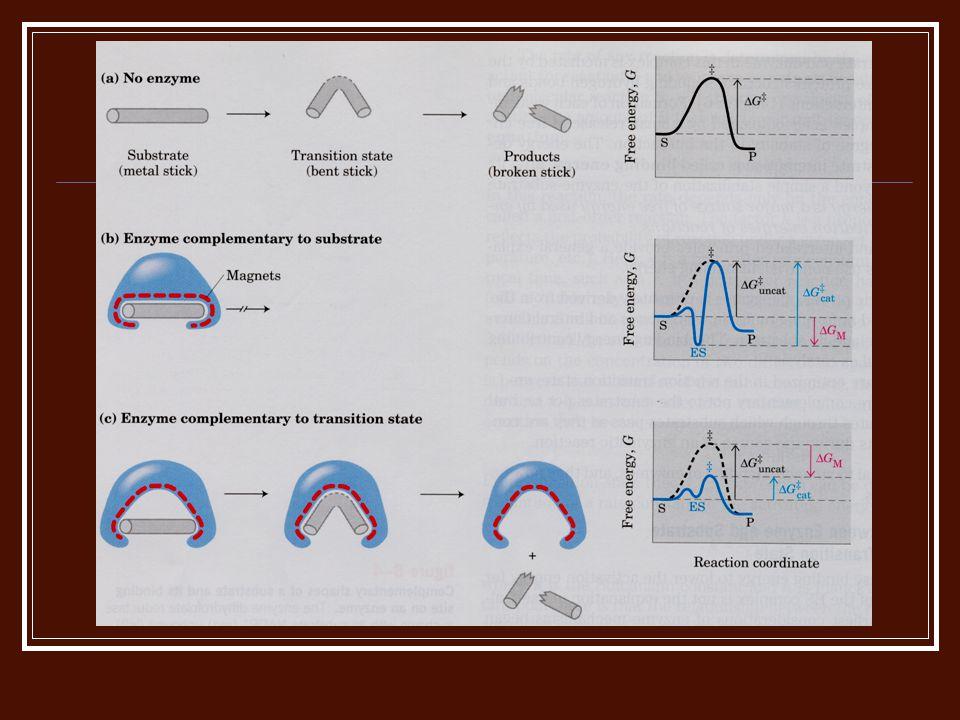Katalis yg paling efisien  mampu mempercepat reaksi 1020 kali lbh cepat Enzim bersifat sangat spesifik, baik jenis reaksi maupun substratnya, Tripsin Trombin