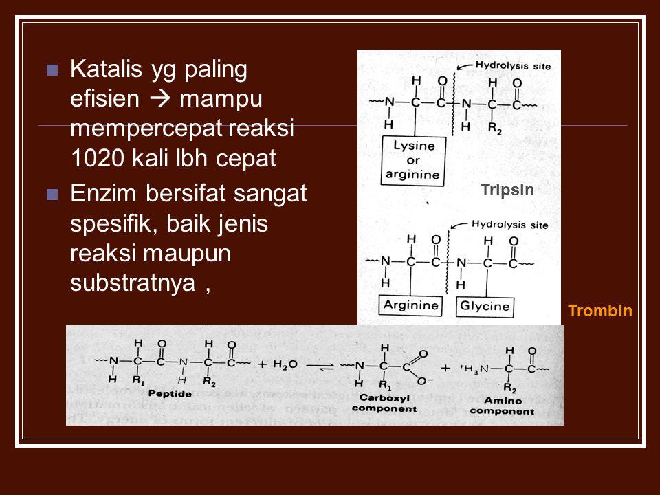 Katalis yg paling efisien  mampu mempercepat reaksi 1020 kali lbh cepat Enzim bersifat sangat spesifik, baik jenis reaksi maupun substratnya, Tripsin