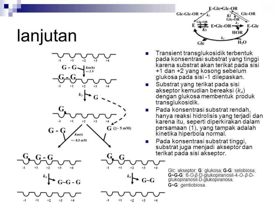 Transient transglukosidik terbentuk pada konsentrasi substrat yang tinggi karena substrat akan terikat pada sisi +1 dan +2 yang kosong sebelum glukosa