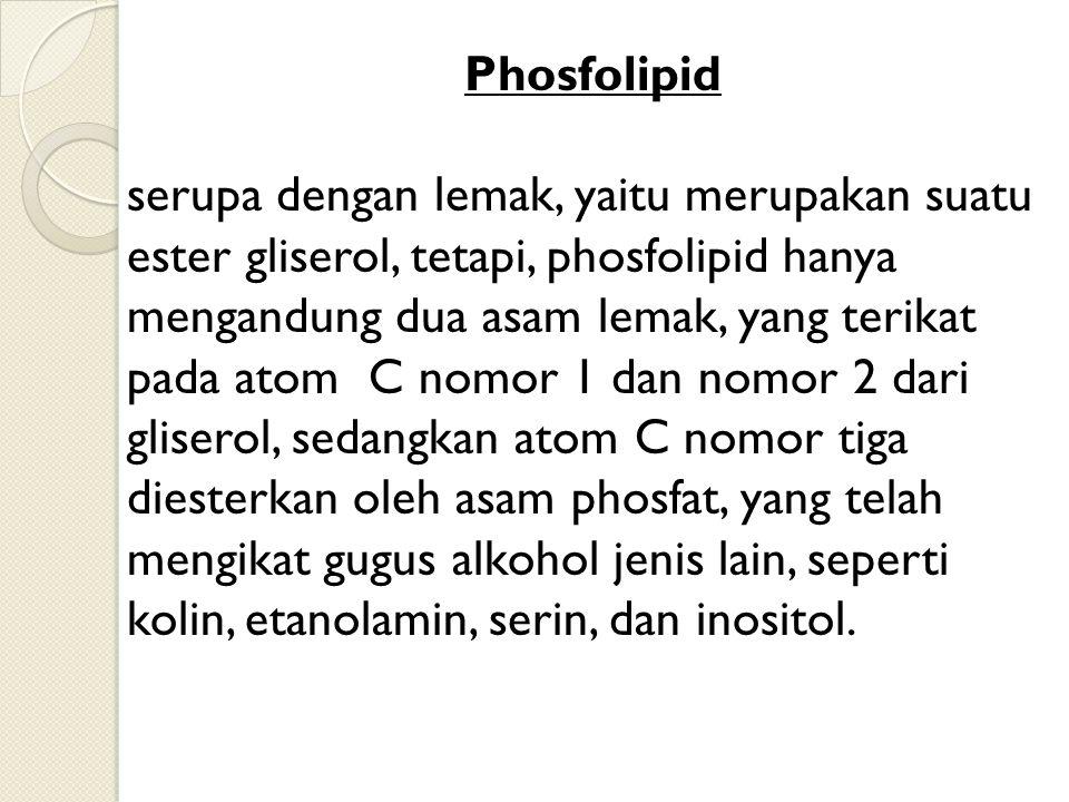 Phosfolipid serupa dengan lemak, yaitu merupakan suatu ester gliserol, tetapi, phosfolipid hanya mengandung dua asam lemak, yang terikat pada atom C n