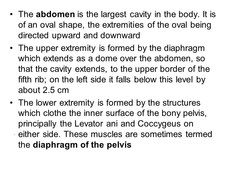 The abdomen is the largest cavity in the body. It is of an oval shape, the extremities of the oval being directed upward and downward The upper extrem