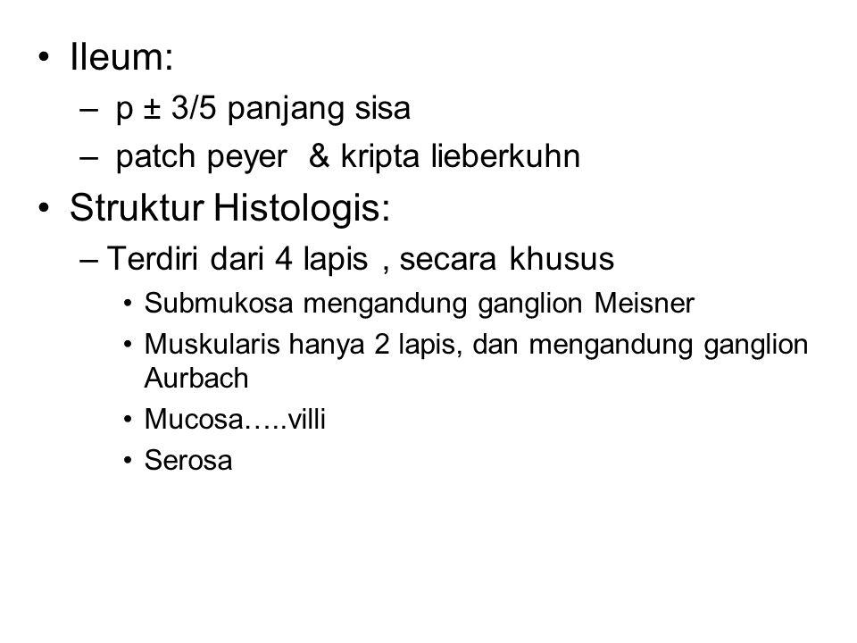 Ileum: – p ± 3/5 panjang sisa – patch peyer & kripta lieberkuhn Struktur Histologis: –Terdiri dari 4 lapis, secara khusus Submukosa mengandung ganglion Meisner Muskularis hanya 2 lapis, dan mengandung ganglion Aurbach Mucosa…..villi Serosa