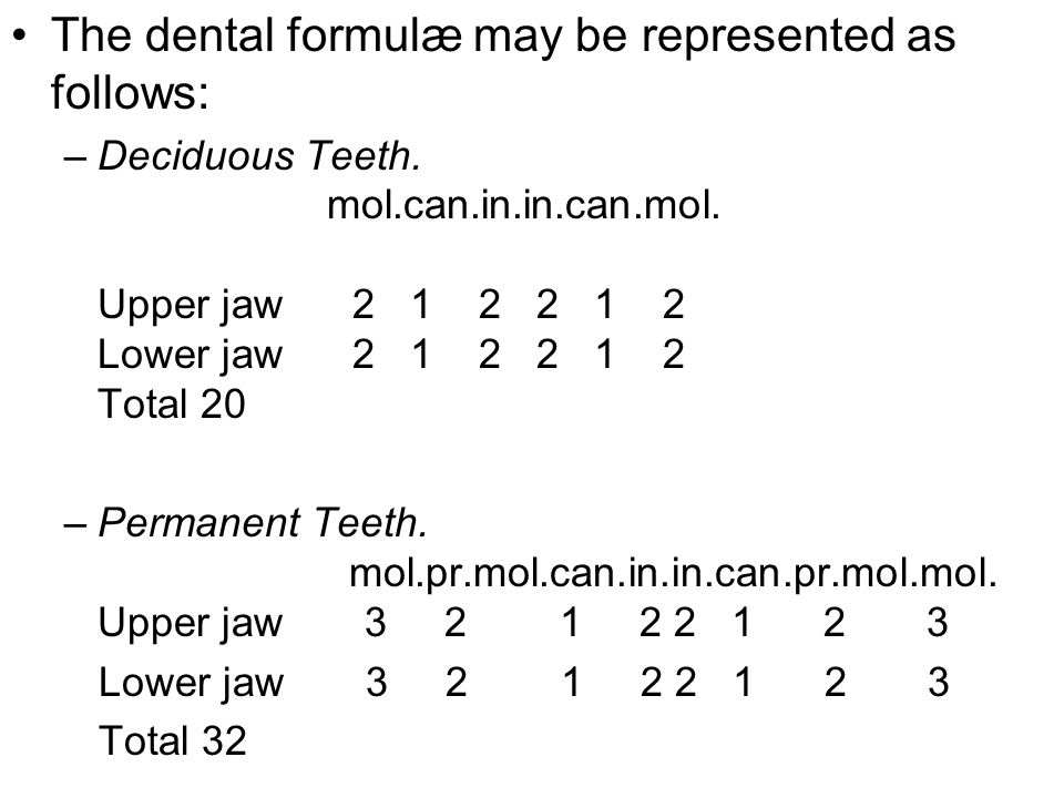 The dental formulæ may be represented as follows: –Deciduous Teeth. mol.can.in.in.can.mol. Upper jaw 2 1 2 2 1 2 Lower jaw 2 1 2 2 1 2 Total 20 –Perma