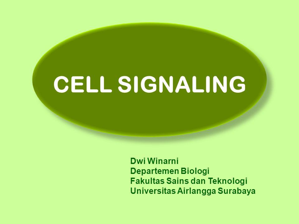 Ligan ekstraselular Kontak antar sel Aktivasi enzim Perubahan organisasi sitoskeleton Perubahan permeabilitas ion Aktivasi sintesis DNA Aktivasi sintesis RNA JALUR PENYEBAB TIMBULNYA SINYAL INTRASELULAR DAN RESPONS SEL TERHADAPNYA matriks ekstraselular