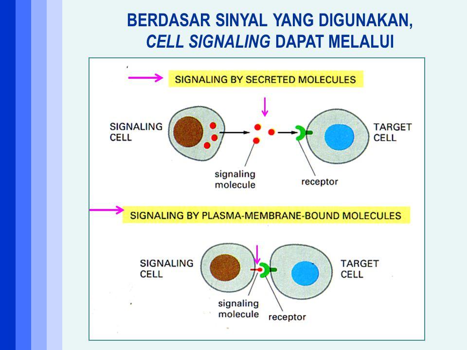 Ligan ekstraselular Kontak antar sel Aktivasi enzim Perubahan organisasi sitoskeleton Perubahan permeabilitas ion Aktivasi sintesis DNA Aktivasi sinte