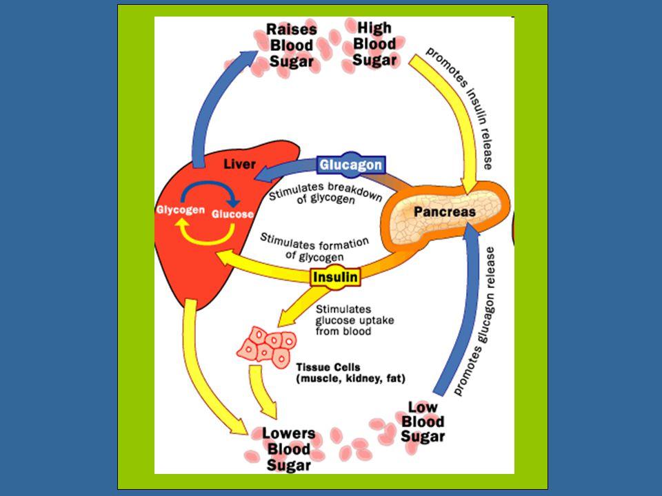 SumberJenis hormonPeran utama dalam AdenohipofisisACTH (adrenocorticotropic hormone) Menstimulasi korteks adrenal TSH (thyrotropic hormone)Menstimulas