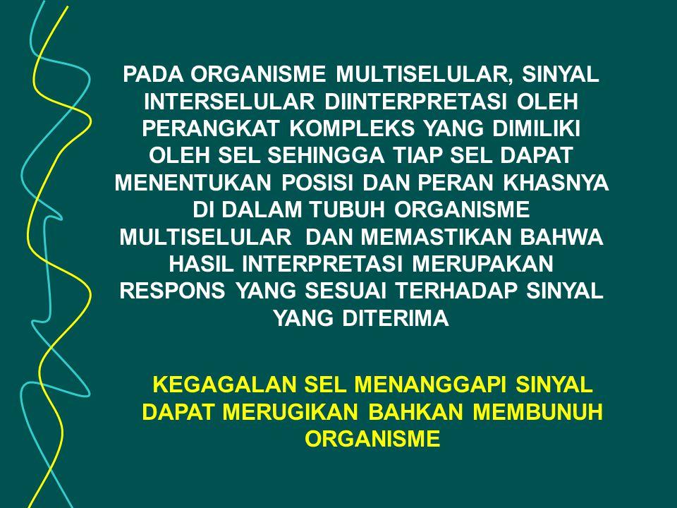 PADA ORGANISME MULTISELULAR, SINYAL INTERSELULAR DIINTERPRETASI OLEH PERANGKAT KOMPLEKS YANG DIMILIKI OLEH SEL SEHINGGA TIAP SEL DAPAT MENENTUKAN POSISI DAN PERAN KHASNYA DI DALAM TUBUH ORGANISME MULTISELULAR DAN MEMASTIKAN BAHWA HASIL INTERPRETASI MERUPAKAN RESPONS YANG SESUAI TERHADAP SINYAL YANG DITERIMA KEGAGALAN SEL MENANGGAPI SINYAL DAPAT MERUGIKAN BAHKAN MEMBUNUH ORGANISME