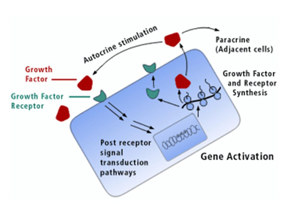CELL SIGNALING KHUSUS  Autocrine  Cell signaling by gap junction