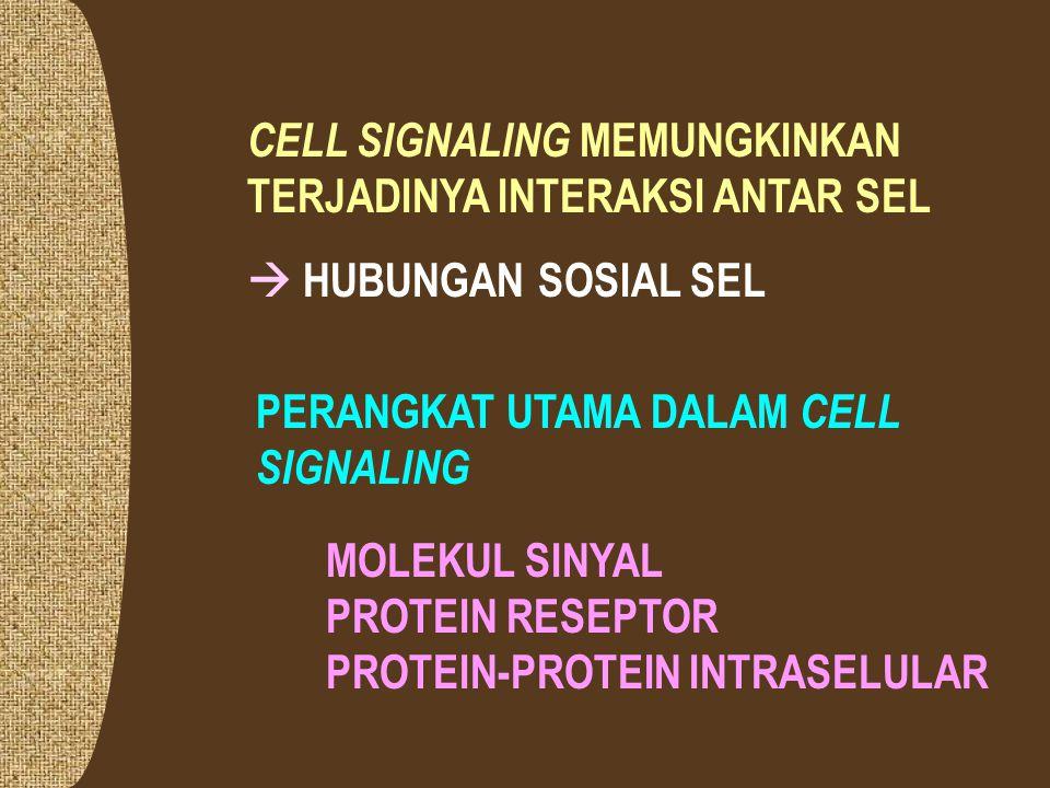 BERDASAR LOKASI RESEPTOR CELL SIGNALING DAPAT MELALUI RESEPTOR PADA UMUMNYA Signaling molecules hidrofilik atau berukuran cukup besar Signaling molecul es berukuran kecil atau hidrofobik