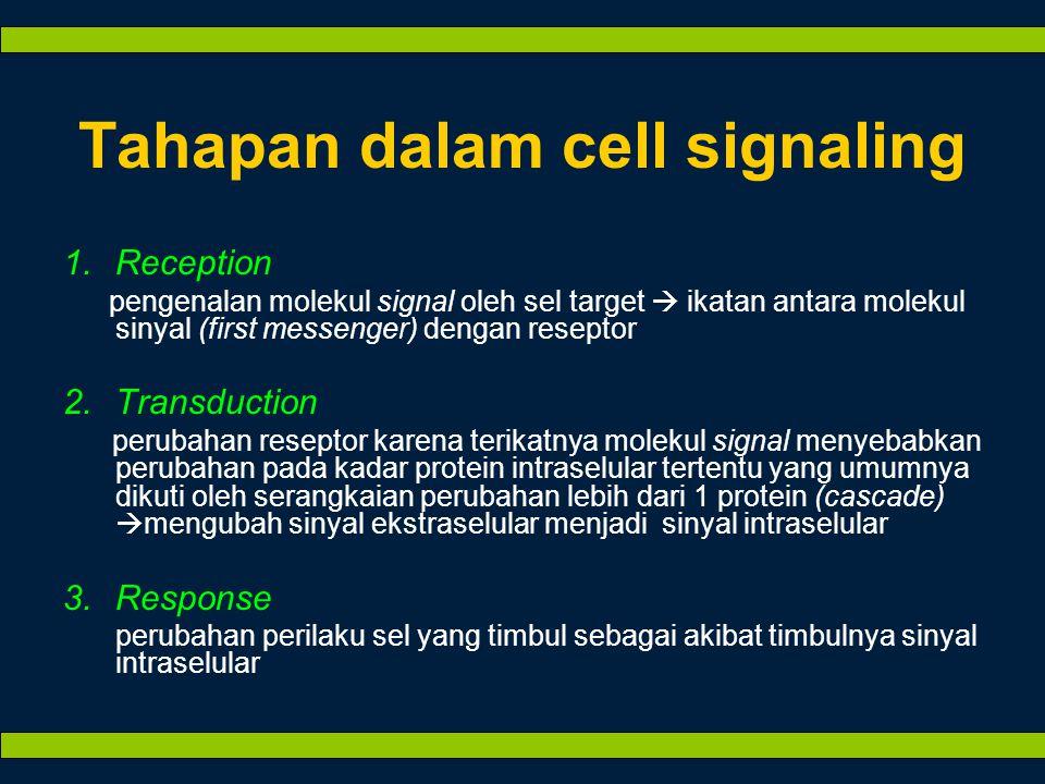 Tahapan dalam cell signaling 1.Reception pengenalan molekul signal oleh sel target  ikatan antara molekul sinyal (first messenger) dengan reseptor 2.Transduction perubahan reseptor karena terikatnya molekul signal menyebabkan perubahan pada kadar protein intraselular tertentu yang umumnya dikuti oleh serangkaian perubahan lebih dari 1 protein (cascade)  mengubah sinyal ekstraselular menjadi sinyal intraselular 3.Response perubahan perilaku sel yang timbul sebagai akibat timbulnya sinyal intraselular