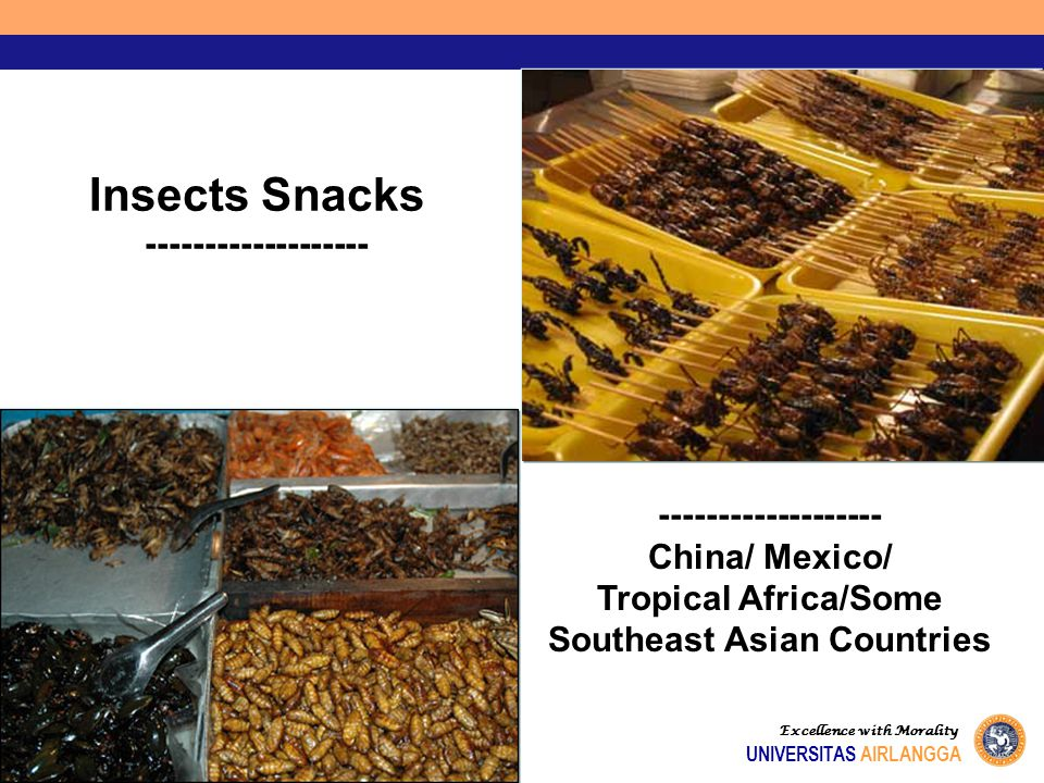 Excellence with Morality UNIVERSITAS AIRLANGGA Insects Snacks ------------------- China/ Mexico/ Tropical Africa/Some Southeast Asian Countries