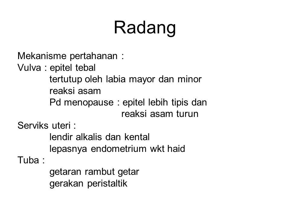 Radang Mekanisme pertahanan : Vulva : epitel tebal tertutup oleh labia mayor dan minor reaksi asam Pd menopause : epitel lebih tipis dan reaksi asam t