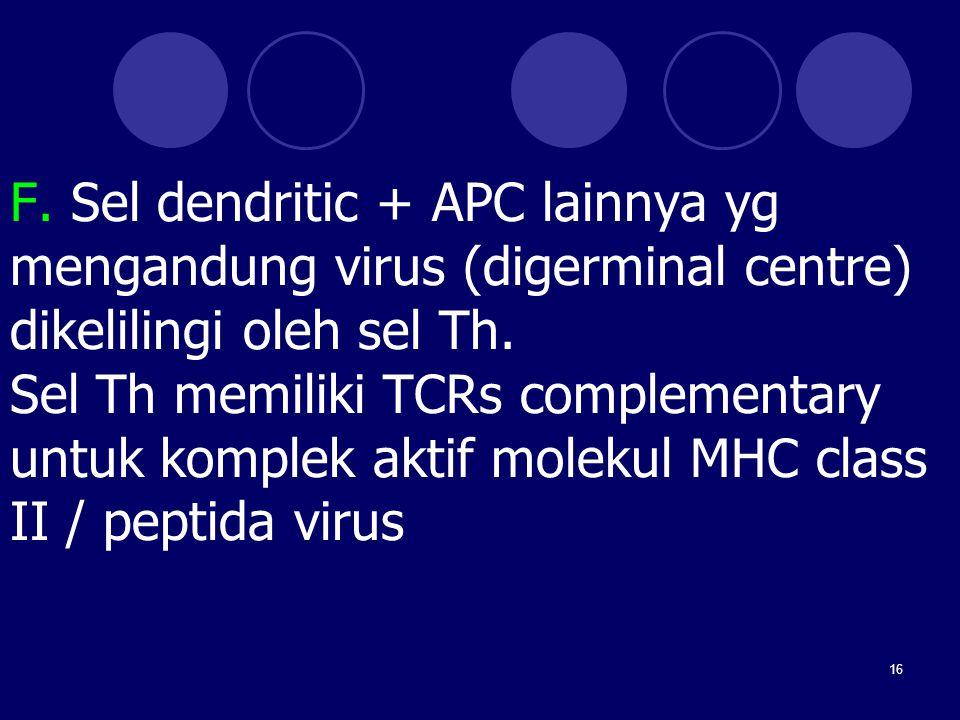 16 F. Sel dendritic + APC lainnya yg mengandung virus (digerminal centre) dikelilingi oleh sel Th. Sel Th memiliki TCRs complementary untuk komplek ak