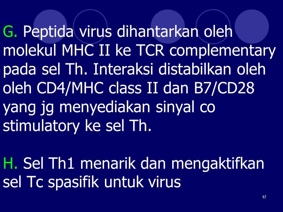 17 G. Peptida virus dihantarkan oleh molekul MHC II ke TCR complementary pada sel Th. Interaksi distabilkan oleh oleh CD4/MHC class II dan B7/CD28 yan